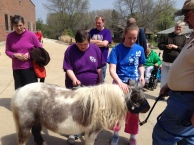 Waiting for a turn to brush Pixie the miniature horse